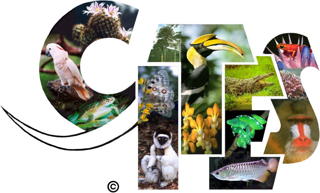 OM recomienda verificar la flora y la fauna protegida antes de viajar