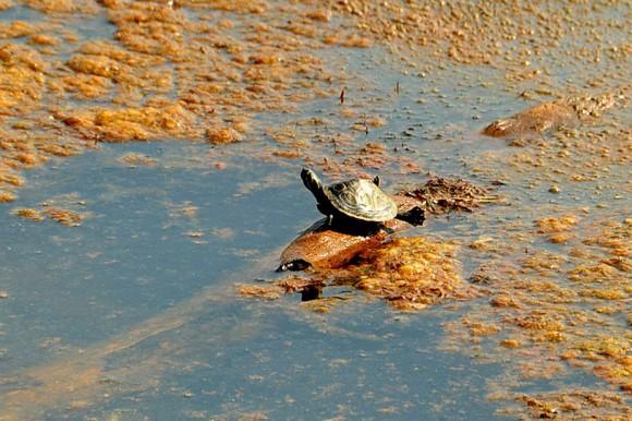 Algas Sargazos continúan siendo un problema