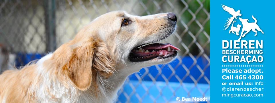 Fundación Protectora de Animales de Curacao hace importante llamado a la comunidad