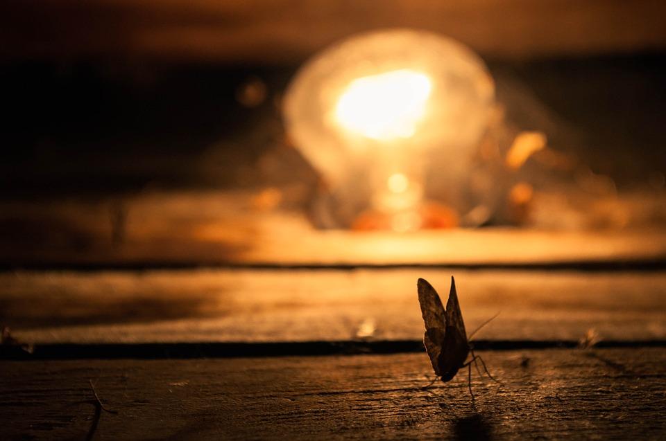 ¿Por qué la luz atrae a los insectos?