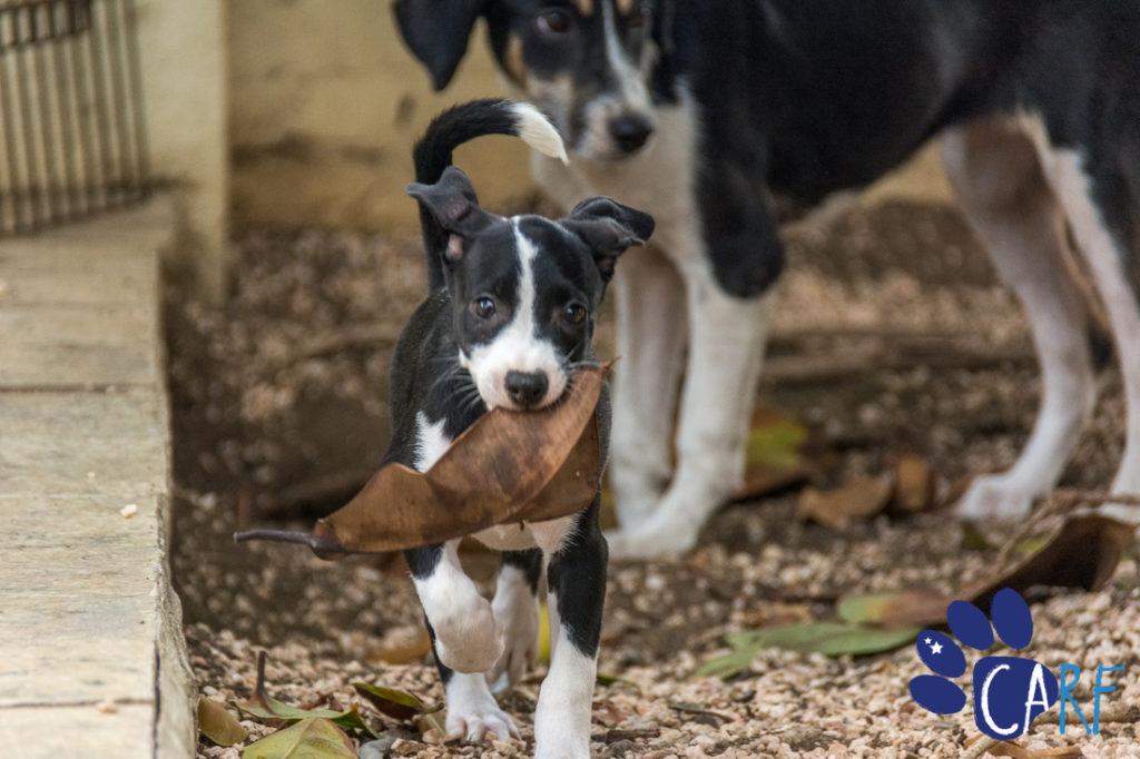 Fundación Curazoleña del Derecho Animal (CARF) celebra 10 años de existencia