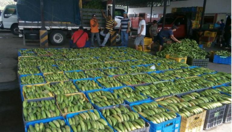 Desde Venezuela exportarán plátanos a Curazao y Aruba
