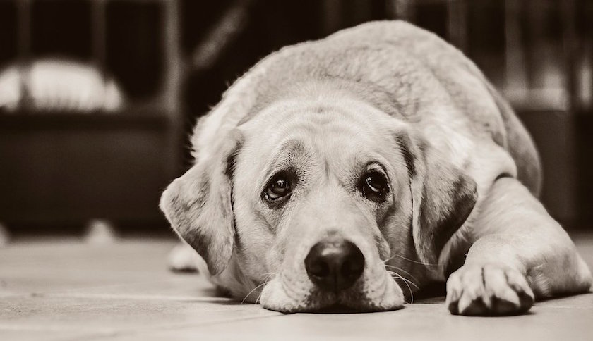 Fundación Protectora de Animales cerrará asilo y sacrificarán a los no adoptados