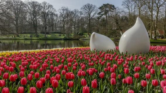 Holanda protege sus tulipanes de los selfis