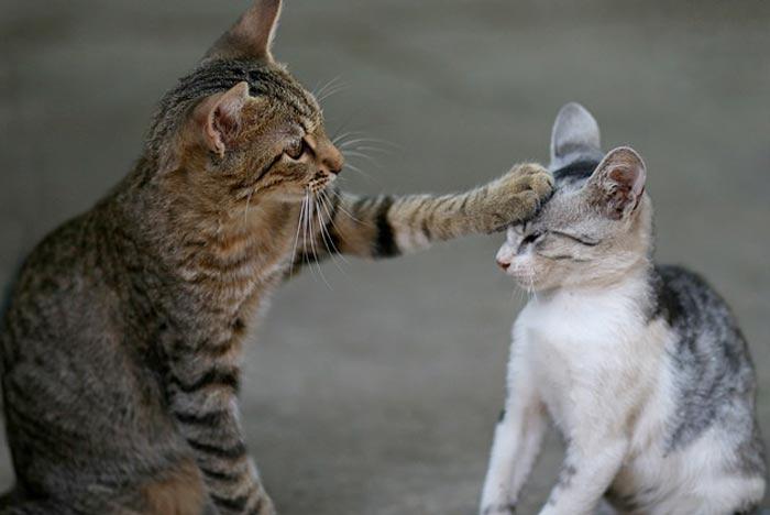 Más de 200 gatos esperan ser adoptados